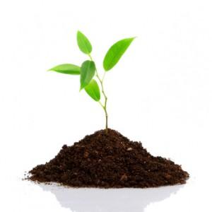 Verantwortung für die Umwelt